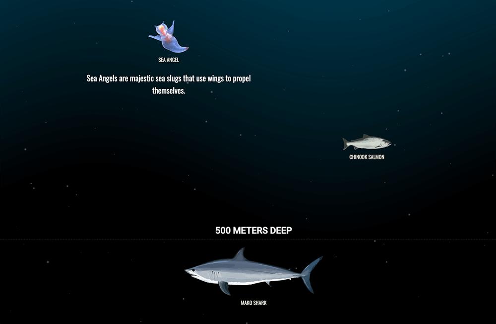 the deep sea, יצורים חיים בועמק הים